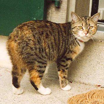 Slike maca odostraga